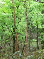 清流沿いに、森の学校の坂田さんの案内で登っていきます。
