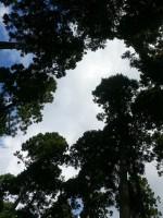 スギを間伐してできた森