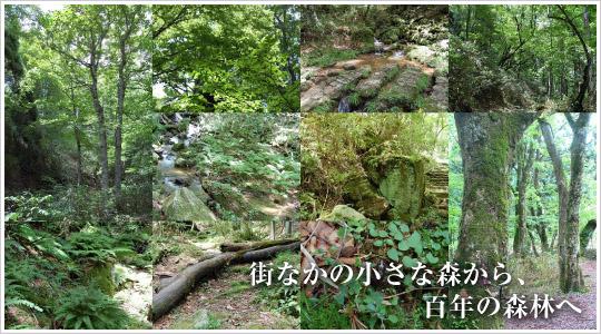 西粟倉百年の森林 探検隊~若杉原生林~